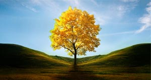 yellow_tree